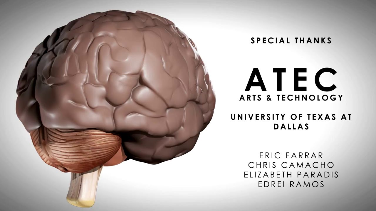 Human Fetal Brain Development - YouTube