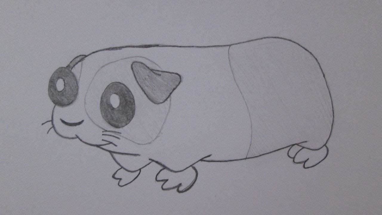 como desenhar um porquinho da índia youtube