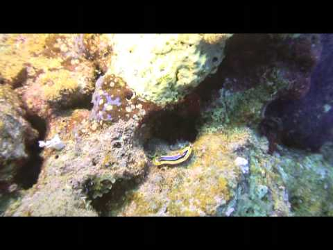 Shaab sharm Mer rouge Egypte