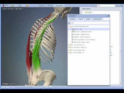 3D Interactive Functional Human Anatomy - NEW 2009! - YouTube