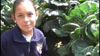 Proyectos Ambientales Escolares PRAES, Municipio de Bojacá
