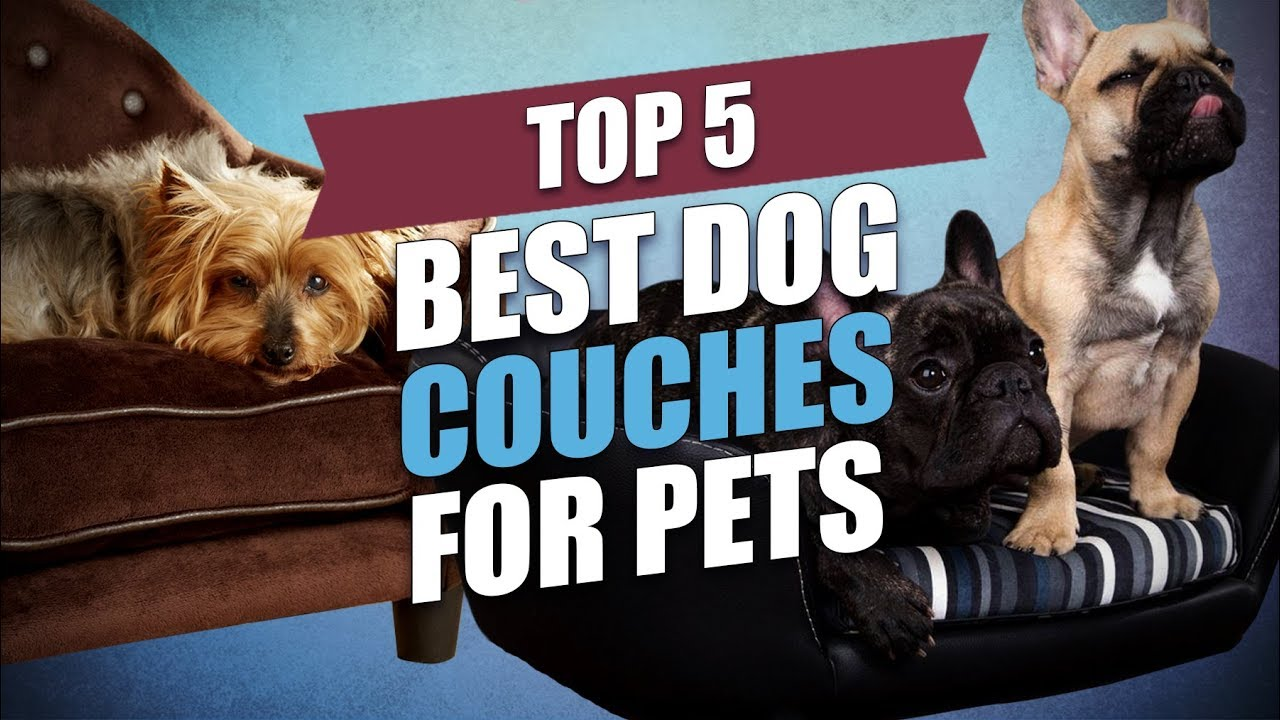 Top 5 Best Dog Couches For Pets
