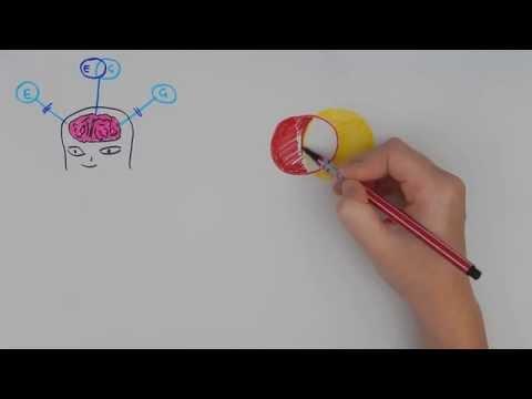 Language influences Thought? - Linguistic Relativity