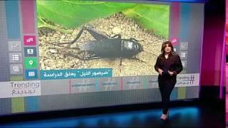 الصراصير تقتحم مدرسة في #السعودية وتتسبب في توقف الدراسة    #بي بي سي ترندينغ