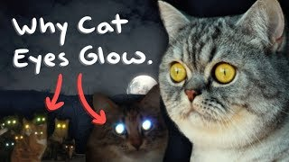 Why Cat Eyes Glow in the Dark