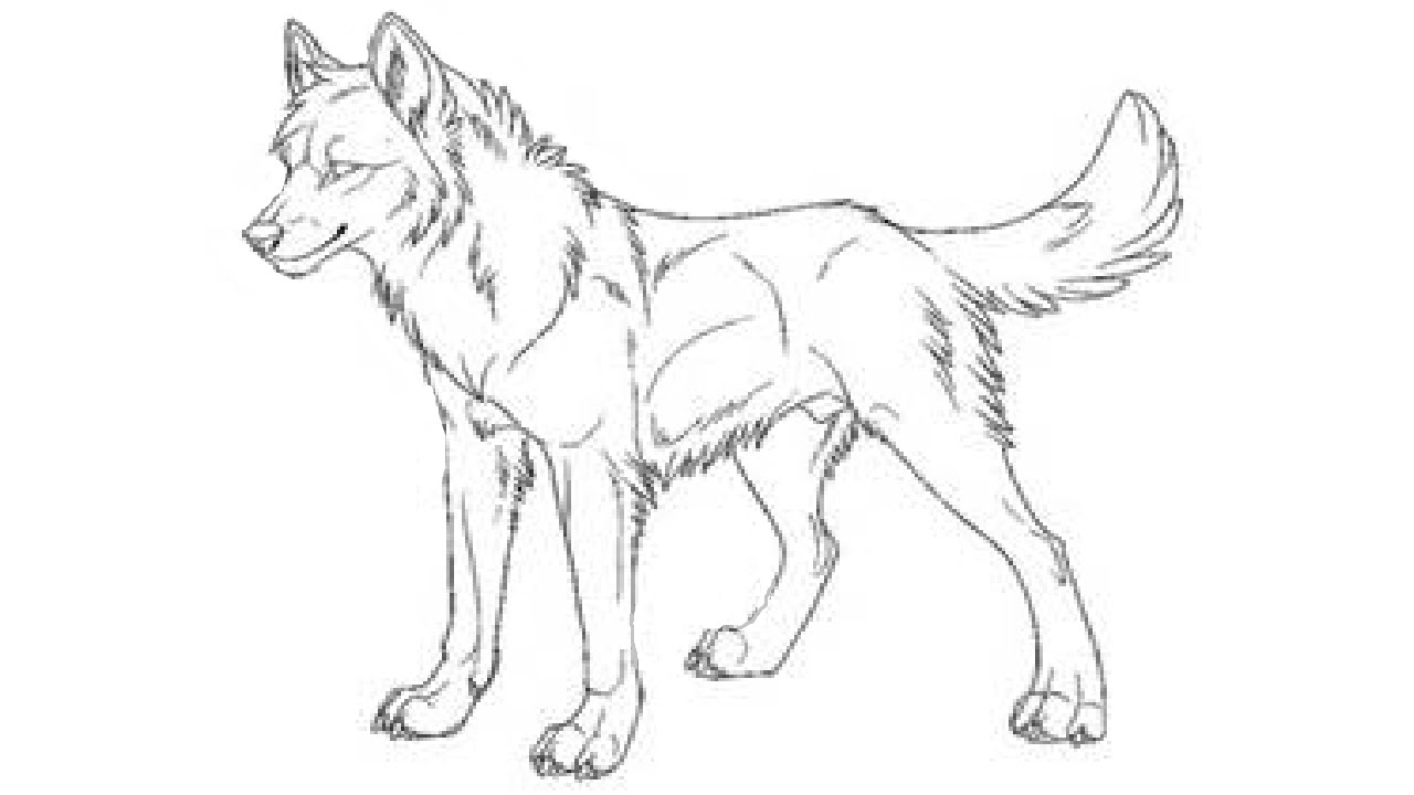 Wolf Drawing Ukran Expolicenciaslatam Co