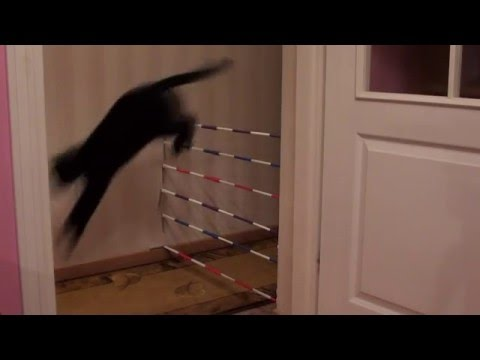 Jumping cats 8