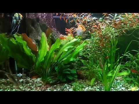 Растения  в аквариуме — влияние на равновесие в аквариуме
