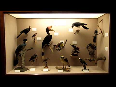 Carnegie Museum of Natural History Bird Hall