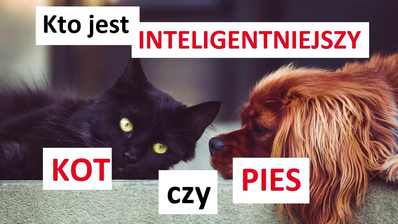 Kto Jest Inteligentniejszy Mądrzejszy Pies Czy Kot Youtube