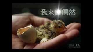 天韻詩歌--國語 ( 1 )
