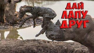 Как животные спасают животных. Уникальная подборка