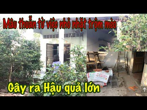 Chỉ Vì Bắt Con Mèo Mà Gây Ra án Mạng ở Tiền Giang