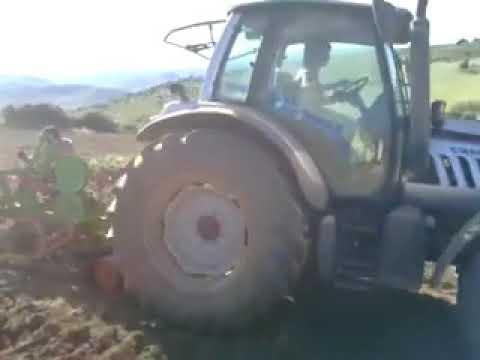 Plantação de olival Mogadouro