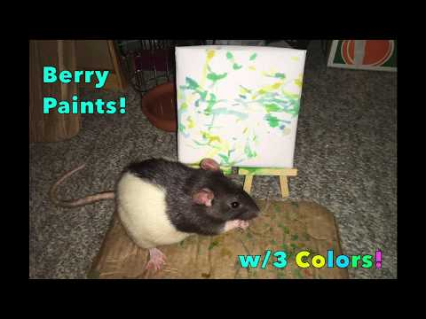Berry Paints (Smaller Canvas + 3 Colors)!