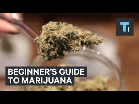 Beginner's guide to marijuana
