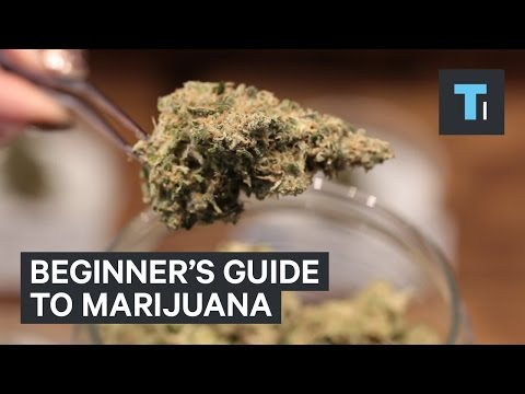 Beginner's guide to marijuana