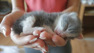 Newborn Kittens Who Have Lost Their Mother Meet Their New Mom