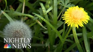 Allergy Season Is Here And Hitting Much Of The Country Hard | NBC Nightly News