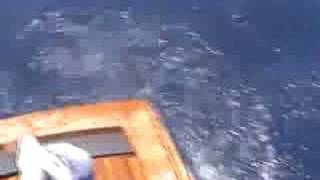 Stunt Gaffing: Deep Sea Offshore Fishing Video