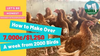 How to Make Oטer $1,200 from 2000 birds In A Week.