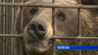 Угостил медведей сгущенкой и лишился руки