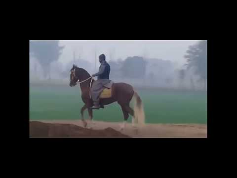 Top 10 Desi Horse Breeds Of Pakistan 2019 - Desi Ghoray 2019