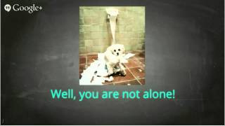 Dog Training Schools - Erase Any Bad Puppy Manners Dog Training Schools