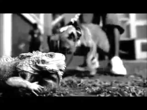 Daddy Yankee Ft Snoop Dogg Varios Artistas - Gangsta Zone Remix