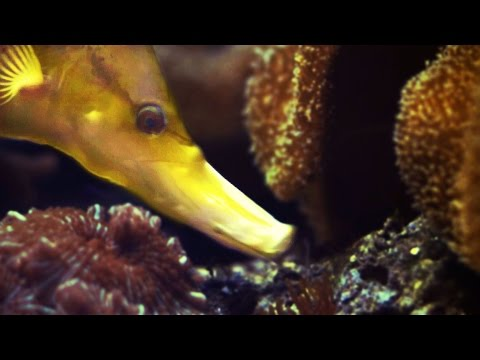 How Fish Eat Part 2 (SLOW MOTION UNDERWATER!) - Smarter Every Day 119
