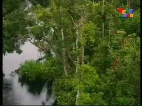 зона экваториальных лесов