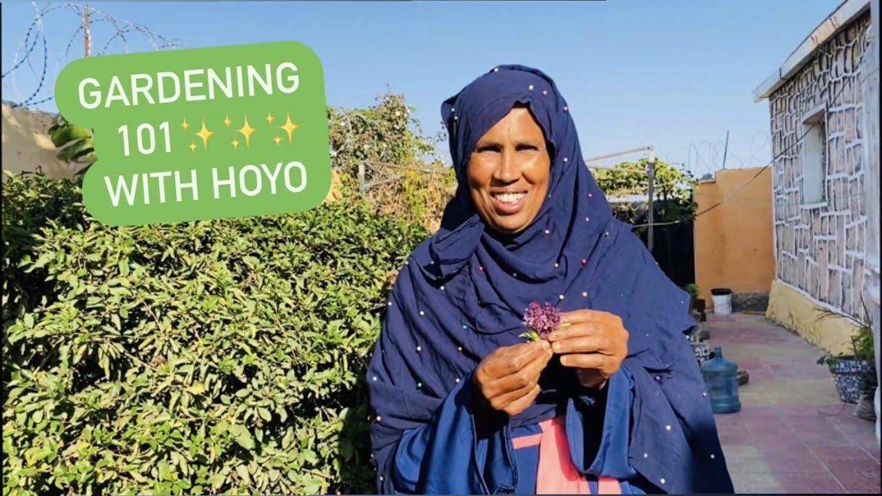 Tips from Hooyos garden in Hargeisa Somaliland 2021