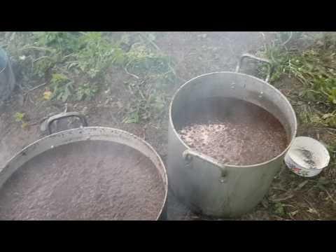 Шелковица полезные свойства и применение шелковицы
