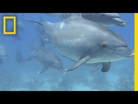 how do dolphins stay awake for so long national geographic how do dolphins stay awake for so long national geographic