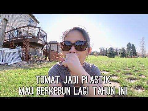 VLOG TOMAT JADI PLASTIK | MAU BEKEBUN LAGI | MADDY SUKSES POTTY TRAINED | AKTIVITAS MUSIM PANAS