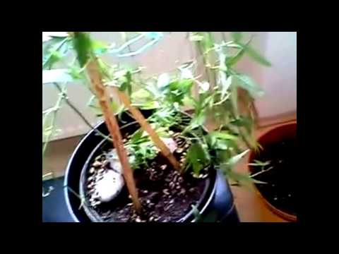 trees - trees planting - planting fruit trees - how to plant a tree