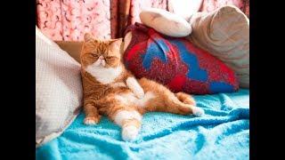 Что делать, если кошка будит по ночам?