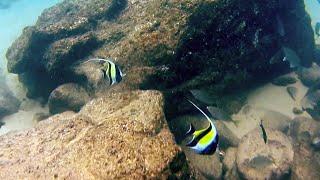 Подводные съемки в Таиланде 2019