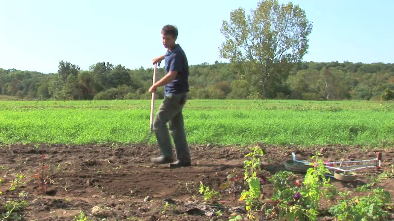 Vegetable garden rows - Vegetable Gardening How To Plant A Vegetable Garden In Rows Youtube