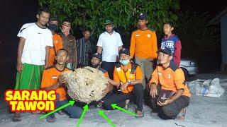 🔴Evakuasi sarang tawon sebesar hampir 1meter,oleh team sar ranger relawan kab ngawi