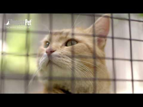 How To Build A DIY Catio Cat Enclosure