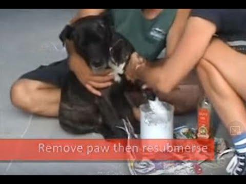 Lifecasting a dog pet paw