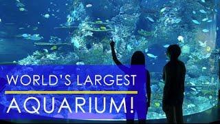 Singapore 2015 (Day 3): SEA Aquarium Sentosa, the Largest in the World!