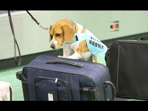 よくあるご質問   成田国際空港公式WEBサイト