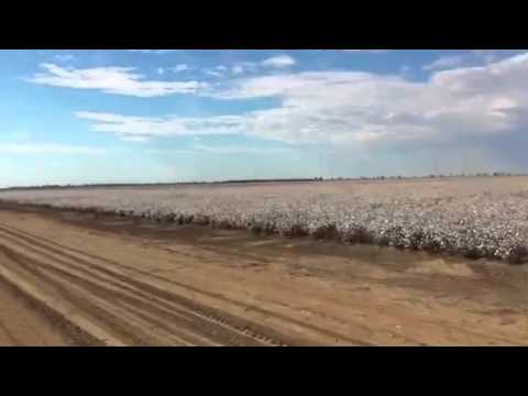 On a cotton farm in Carinda