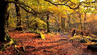 Steeleye Span - Marigold/Harvest Home