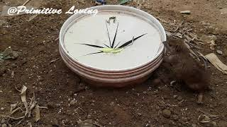 Best Simple Bucket Mouse Trap/Rat Trap - Deep Hole Rat Trap 2019 Video