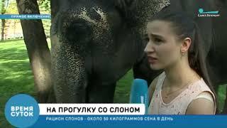 Смотреть видео Телеканал Санкт-Петербург - репетиция парада слонов онлайн