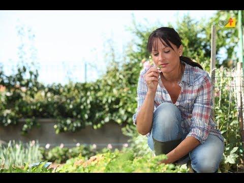 Clique e veja o vídeo Curso a Distância Cultivo Orgânico de Hortaliças - Sistema de Produção
