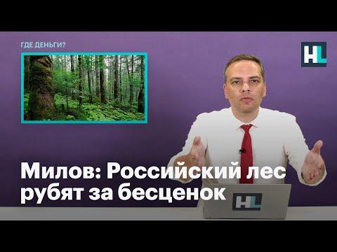 Милов: Российский лес рубят за бесценок